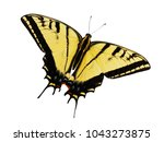 The Two Tailed Swallowtail...