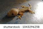 abnormal lizard stand on the...   Shutterstock . vector #1043296258
