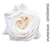 white rose isolated on white   Shutterstock . vector #1043306932