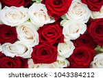 Beautiful Roses   Nature...