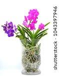 purple and pink vanda orchids | Shutterstock . vector #1043397946