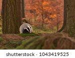 beautiful european badger ... | Shutterstock . vector #1043419525