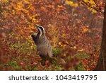 beautiful praying european... | Shutterstock . vector #1043419795