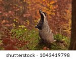 beautiful praying european... | Shutterstock . vector #1043419798