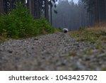 running beautiful european... | Shutterstock . vector #1043425702