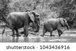elephant family having a drink... | Shutterstock . vector #1043436916