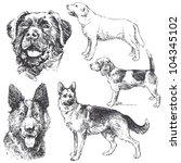 Dogs   Hand Drawn Set