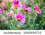 field of pink daisies  purple... | Shutterstock . vector #1043454715