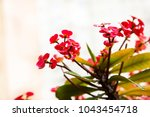crown of thorns  plant of... | Shutterstock . vector #1043454718