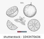 hand drawn orange isolated.... | Shutterstock .eps vector #1043470636