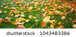 colorful autumn leaves | Shutterstock . vector #1043483386