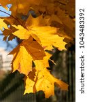 colorful autumn leaves | Shutterstock . vector #1043483392