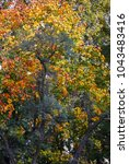 colorful autumn leaves | Shutterstock . vector #1043483416