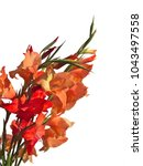 bouquet of red and orange... | Shutterstock . vector #1043497558