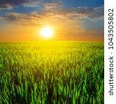green summer rural field at the ... | Shutterstock . vector #1043505802