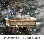 A Pair Of Blue Jays Take Their...