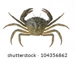 Living Crab Isolated On White