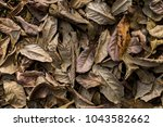 leafs fall down on the ground... | Shutterstock . vector #1043582662