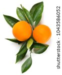 Top View Of Two Orange Fruits...