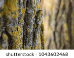 mossy tree close up | Shutterstock . vector #1043602468
