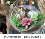 mini succulents in glass... | Shutterstock . vector #1043603056