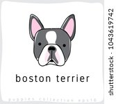 Boston Terrier   Dog Breed...