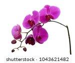 beautiful purple phalaenopsis... | Shutterstock . vector #1043621482