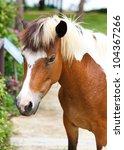 Dwarf Horses In Garden White...