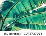 Tropical Banana Palm Leaf ...