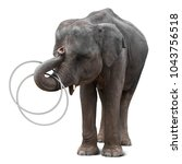 Stock photo cute baby elephant playing hulahoop isolated on white background with clipping path 1043756518
