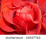 on a photo a red rose by macro... | Shutterstock . vector #10437763