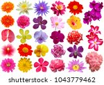 Stock photo colorful flower isolated collection set with clipping path 1043779462
