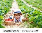 little kid boy picking... | Shutterstock . vector #1043812825