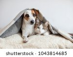 dog and cat together. dog hugs... | Shutterstock . vector #1043814685