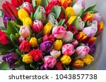 Mix Of Spring Tulips Flowers...