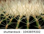 full frame of cactus spines | Shutterstock . vector #1043859202