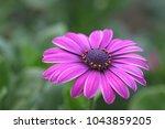 purple flowers blooming in... | Shutterstock . vector #1043859205