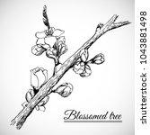 blossomed tree branch... | Shutterstock .eps vector #1043881498