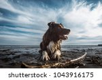 Stock photo  happy dog puppy pet playing with a wooden stick on sandy beach 1043916175