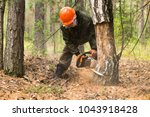 man cuts tree with chainsaw in ... | Shutterstock . vector #1043918428