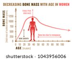 decreasing bone mass with age... | Shutterstock .eps vector #1043956006