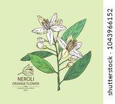 neroli  orange flower  orange... | Shutterstock .eps vector #1043966152