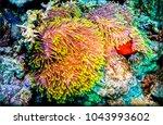 underwater coral world close up | Shutterstock . vector #1043993602