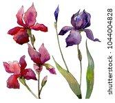 wildflower  iris flower in a... | Shutterstock . vector #1044004828