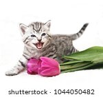 the kitten meows shouts... | Shutterstock . vector #1044050482