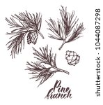 Hand Drawn Pine Branch With...