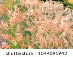 out of focus image  blur and... | Shutterstock . vector #1044091942