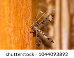 blotched long horned owlfly ... | Shutterstock . vector #1044093892