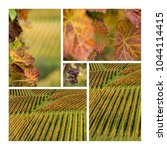 Collage A Vineyard Autumn - Fine Art prints