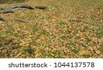 dried leaves under tree  | Shutterstock . vector #1044137578